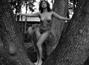 Up a Tree!